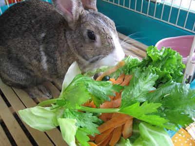 IMG_野菜4558