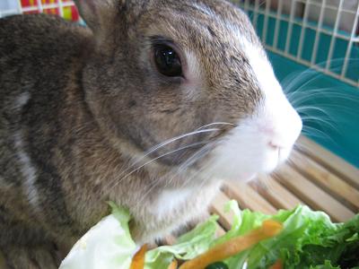IMG_野菜4565
