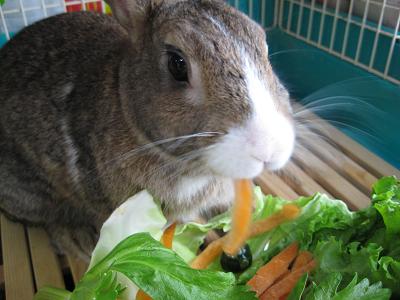 IMG_野菜4566