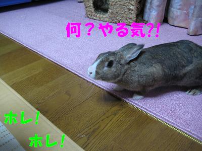 IMG_怒り4531