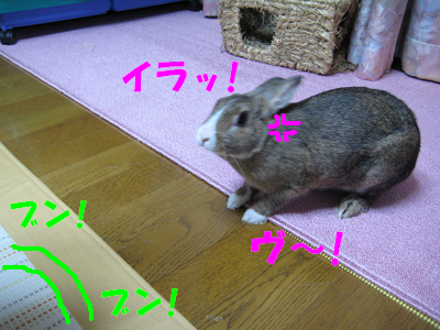 IMG_怒り4532