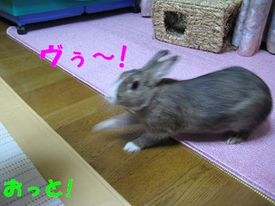 IMG_怒り4533