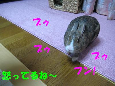 IMG_怒り4534