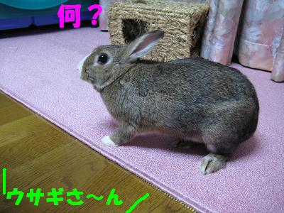 IMG_怒り4538