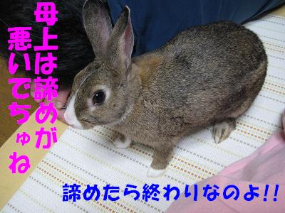 IMG_ねぇ4453