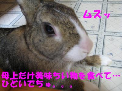 IMG_靴下4635