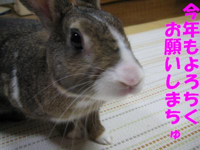 IMG_年賀4740