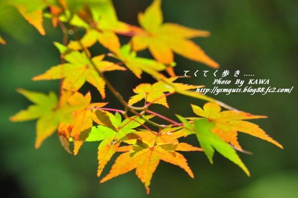 7興隆寺_5105