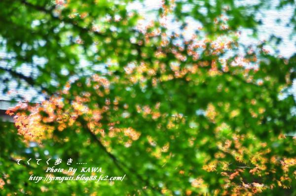 9興隆寺_5095