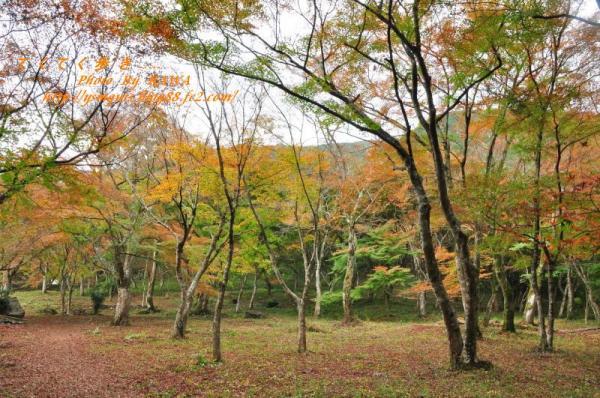 1稲荷山DSC_5312
