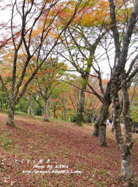 2稲荷山DSC_5263