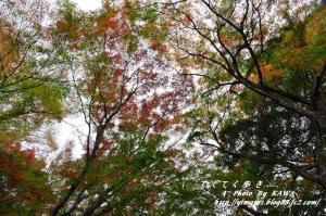 5稲荷山DSC_5305