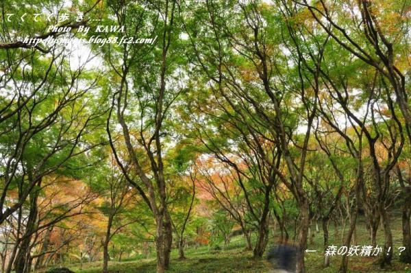 6稲荷山DSC_5298