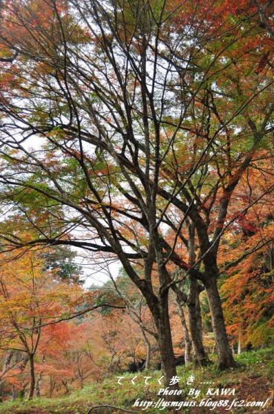 8稲荷山DSC_5283