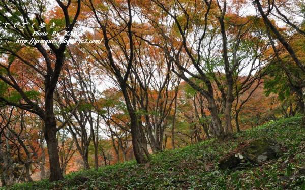 5稲荷山_5620