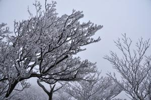 3霧氷_5883
