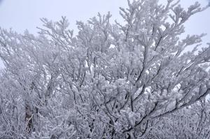 4霧氷_5911