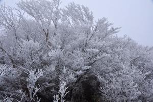 5霧氷_5907