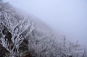 6霧氷_5933