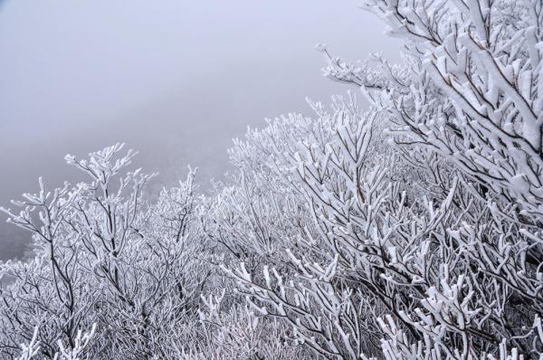 7霧氷_5896