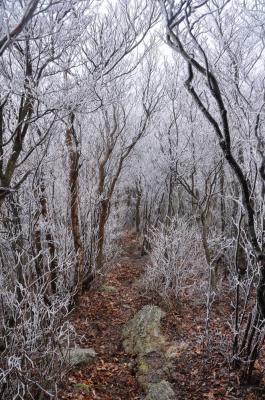 8霧氷_5935