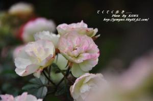 4かわら館_6106