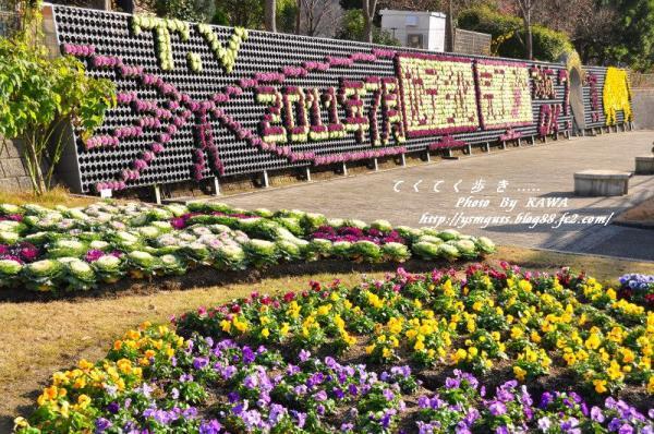 2花卉_6800