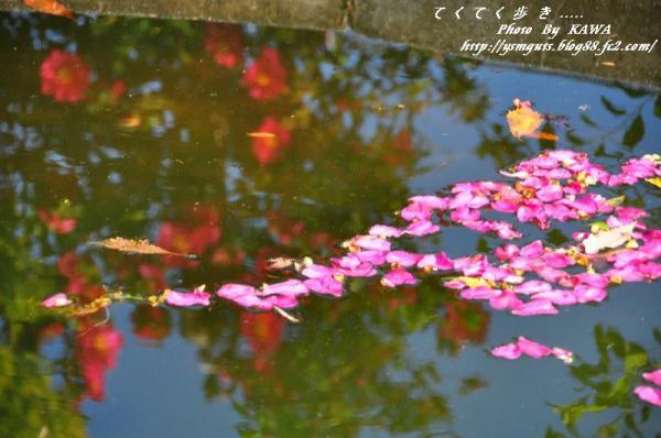 3花卉_6763