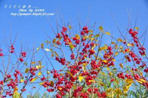 4花卉_6770