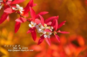 5花卉_6776