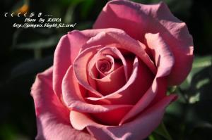 7花卉_6787