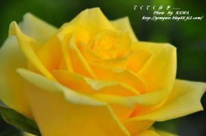 8花卉_6793