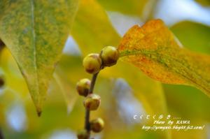 12緑化_6819