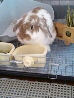 写真キャプション=Y嬢のお姉さん一家が飼っているウサギの「リンちゃん」。今年の干支なので急遽、登場してもらった