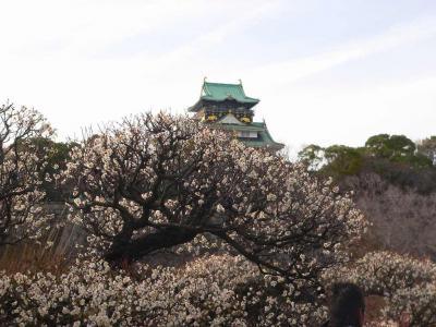 写真キャプション=南高梅が咲く向こうに見える大阪城
