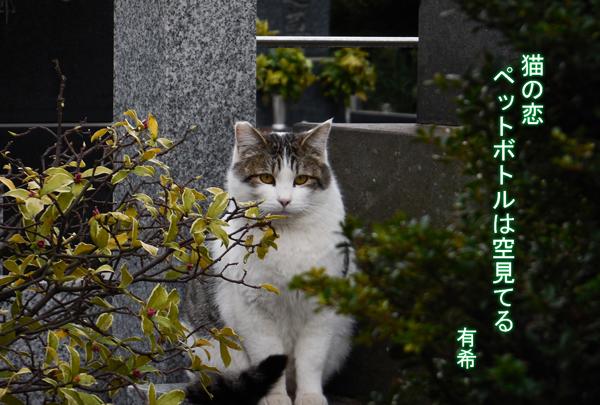 a cat rt c