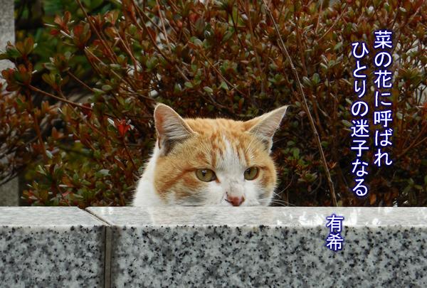 a cat 2 rt c