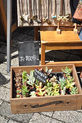 ABCハウジング 多肉植物