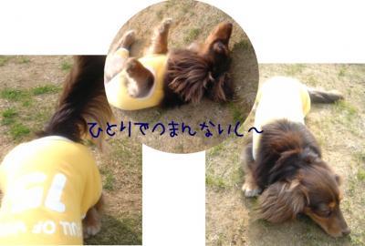 meiblog36