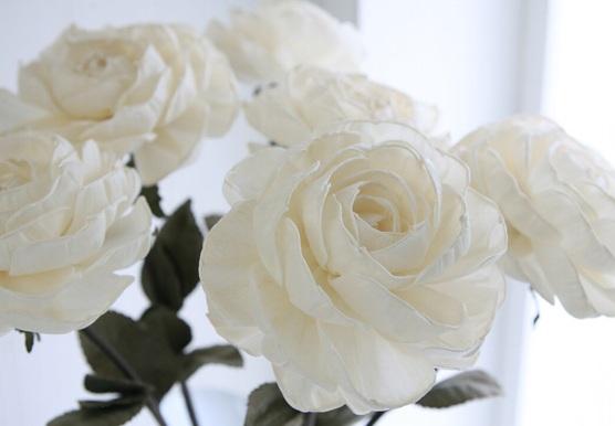 s白いバラ