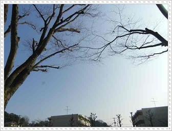 IMGP3259.jpg