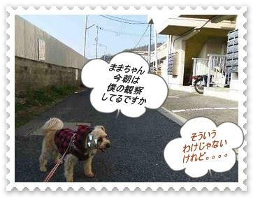 IMGP3265_20130201002421.jpg