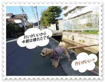 IMGP3963.jpg