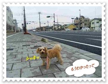 IMGP4465_20130228003247.jpg