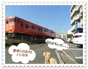 IMGP4537.jpg
