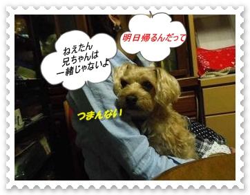IMGP4927_20130308011736.jpg