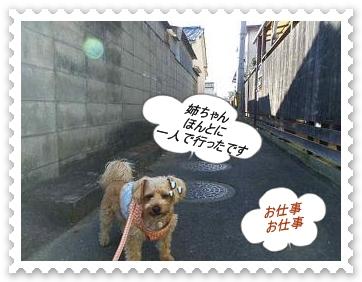 IMGP5151_20130313011201.jpg