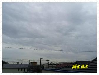 IMGP5421_20130318231329.jpg