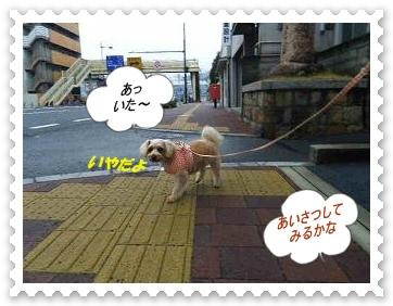IMGP5451_20130318232736.jpg