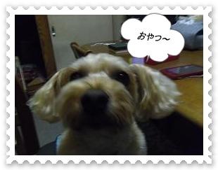IMGP5457_20130318233009.jpg